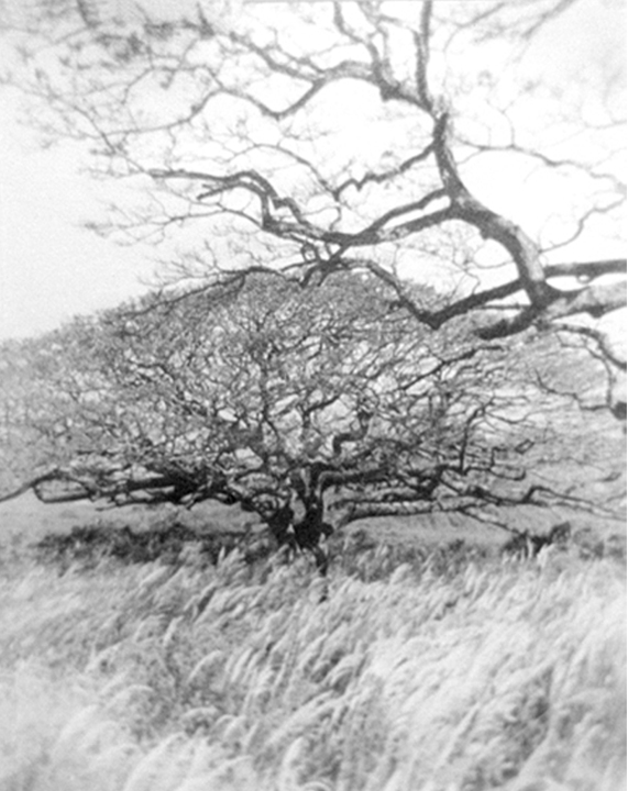 From the Lonely Afternoons - Silver Gelatin Photography by Gwen Arkin