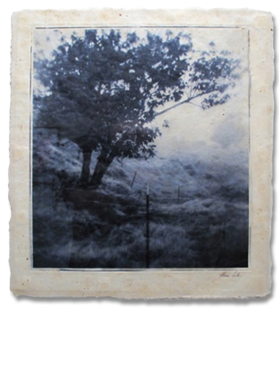 Mahoe - Photogravure Photography by Gwen Arkin