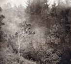 'Ohia Lost - Photogravure Photography by Gwen Arkin